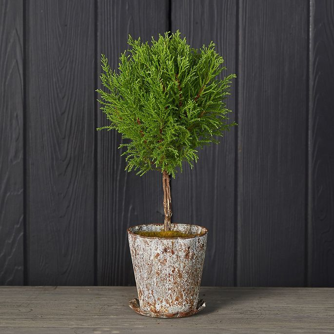 This faux lemon cypress topiary comes in a distressed pot.
