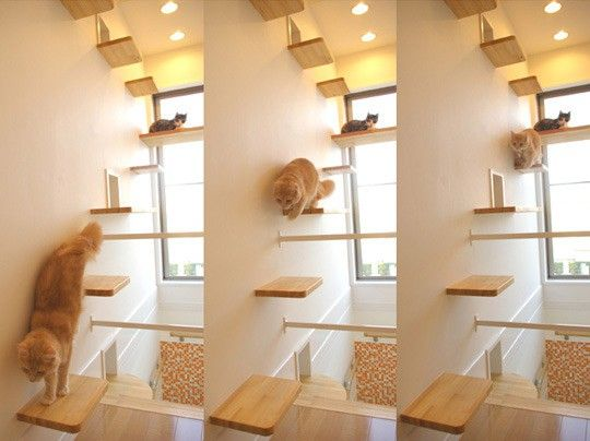 The Cats' House in Japan