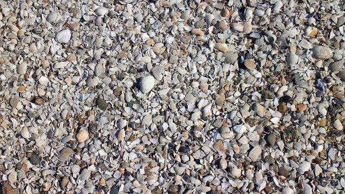 Crushed seashells for use on paths