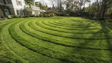 Grow a Quarantine Lawn That Makes Friends Green With Envy