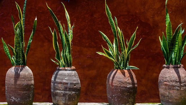Black Thumbs, Rejoice! 6 Houseplants That Love Low-Light Conditions