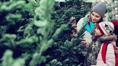 The Best Time to Buy a Christmas Tree If You're Looking for a Bargain
