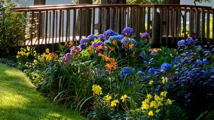These Shade-Loving Plants Will Flourish Without Tons of Sun