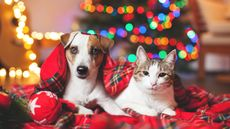 Got Pets as Holiday Guests? How to Pet-Proof Your House