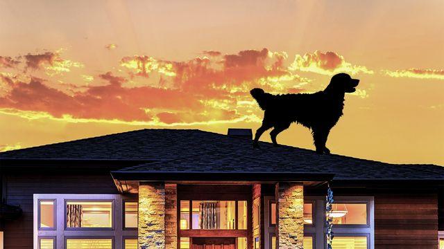 dog-on-roof
