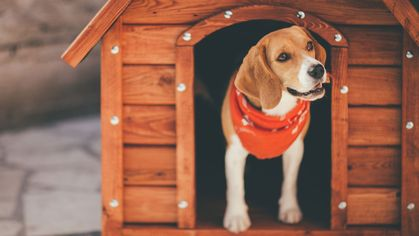 The Most Fabulous Homes for Dogs, Cats, Birds, Bunnies, and Beyond