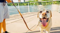 Top 10 American Cities for Dogs (and the People Who Love Them)