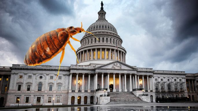 bed-bugs-DC
