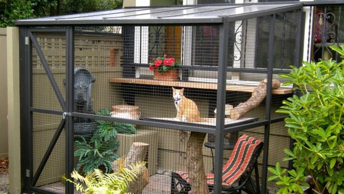Catio. It's a patio for cats. Questions?