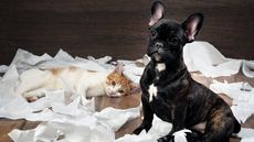 9 Insanely Hilarious Ways Pets Can Wreck Your Home