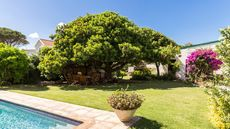 Big Trees, Big Problems: 7 Reasons to Think Twice Before Buying a Home With a Shady Backyard