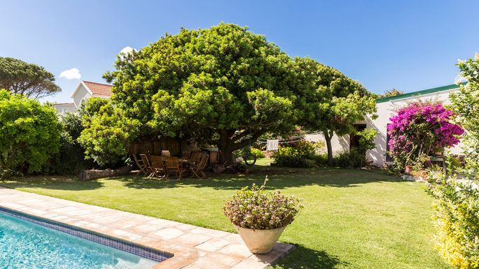 Cost of buying a mature tree