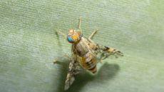 How to Get Rid of Fruit Flies, in 4 Simple Steps