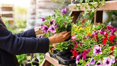How To Choose the Right Plants for Your Garden: A Step-by-Step Guide