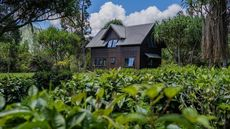 Read the Tea Leaves and Brew Up a New Life at an $8.5M Tea Plantation on Kauai