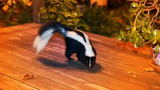 How to Keep Skunks Out of Your Yard: 4 Surefire Tactics to Repel Pepe Le Pew
