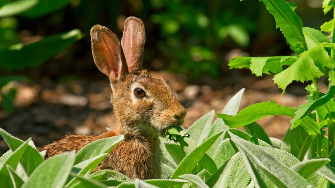 Protect Your Yard From Wild Animals Realtor Com 174