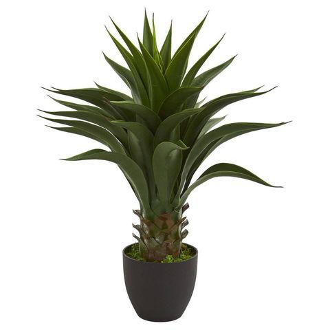 Real vs. Faux Plants