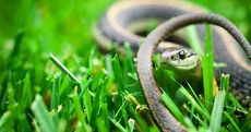 7 'Pests' That Are Actually Good for Your Yard and Garden