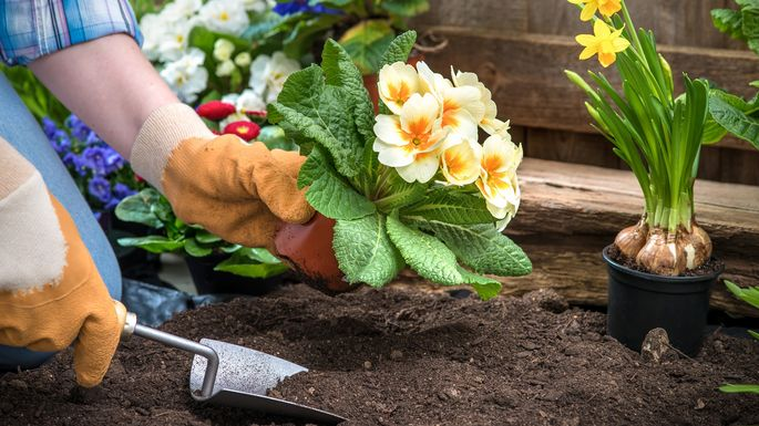 Prepare the soil before planting new flowers.
