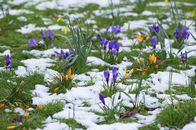 How to Revive a Lawn That Took a Beating This Winter