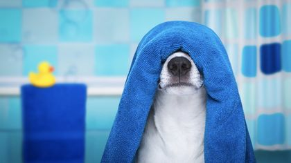 How to Remove Dog Smells From Your Home (Because Honestly Fido Stinks)
