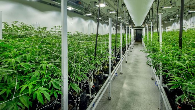 Could This Marijuana REIT Make (or Lose) Millions? | realtor.com®