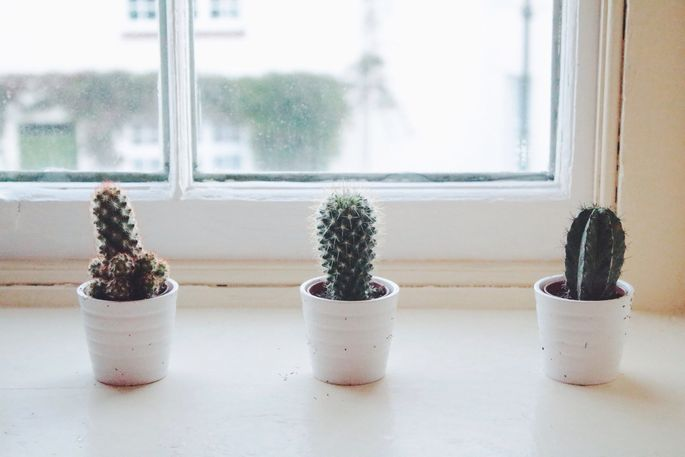 Save money by decorating with small plants.