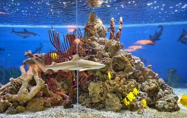 Gilbert Arenas' Shark Tank is So Gilbert Arenas