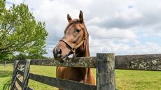 Win, Place, or Show: Gallop Away With One of These 10 Horse Farms for Sale