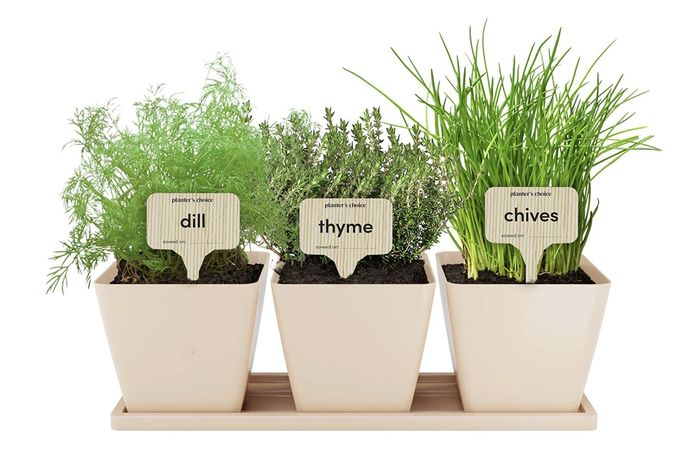 An herb garden is a no-brainer for the kitchen.
