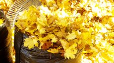 6 Ways to Properly Dispose of Leaves This Fall