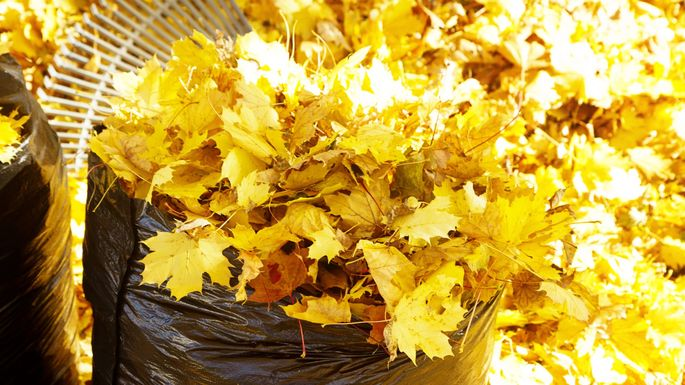 bagging-leaves
