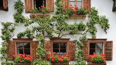 What Is an Espalier? How To Grow a 'Living Fence' in Your Yard