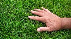 The 5 Best Lawn Care Resources To Help Keep Your Grass Green and Healthy