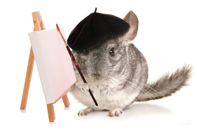 Chinchillas have quite the personality, but not all have this artistic flair.