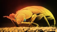 Bedbugs: Everything You Never Wanted to Know (But Need to Anyway)