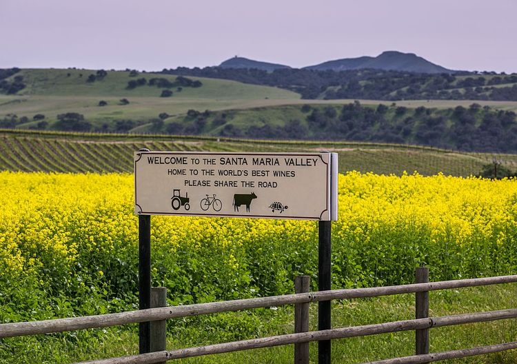Santa Maria sits in the middle of California's Central Coast wine country.