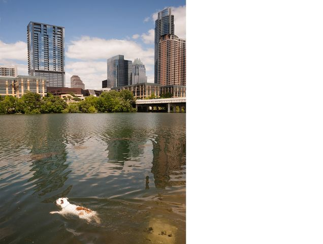A dog swimming in Austin