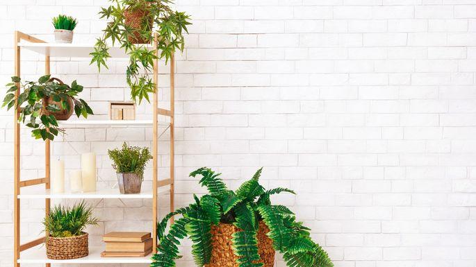 plants-on-bookshelf