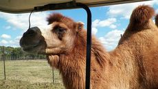 All Animals Included! Buy Your Own Texas Zoo for $7M