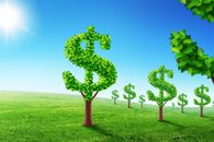 Trees May Not Grow Money, but They Do Have Financial Benefits