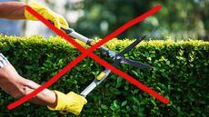 6 Backyard Design Rules You Should Break in 2021