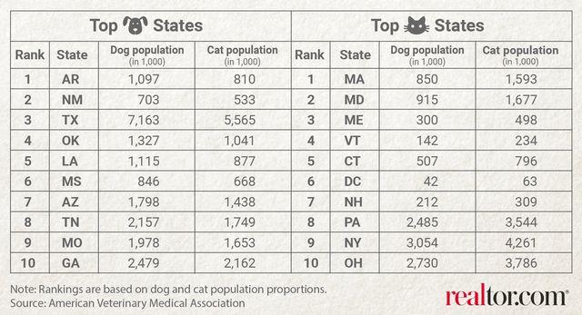 cat dog population