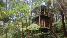 Nature Calls! Tantalizing Treehouse for Sale on the Big Island of Hawaii