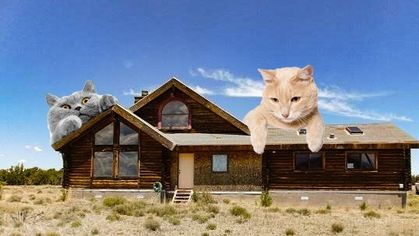 It's Raining Cats in This Arizona Cabin for Feline Lovers