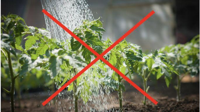 vegetable-growing-mistakes