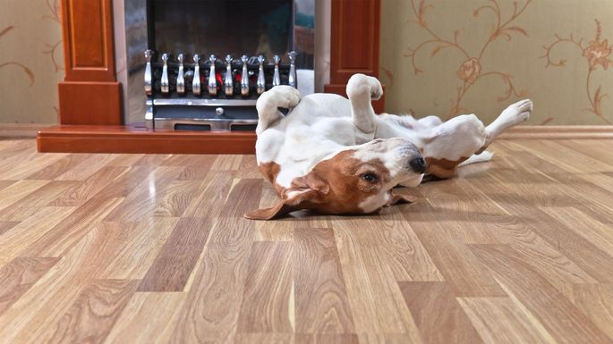 What Is The Best Flooring For Dogs And Other House Pets Realtorcom - Which flooring is best for house