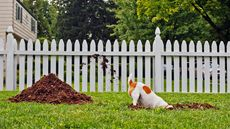 'Help, My Dogs Are Wrecking My Yard!'