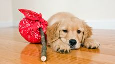 Don't Forget Your Pet When You Move (And Other Crazy Leave-Behind Tales)